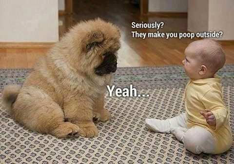Dog and baby poop inside